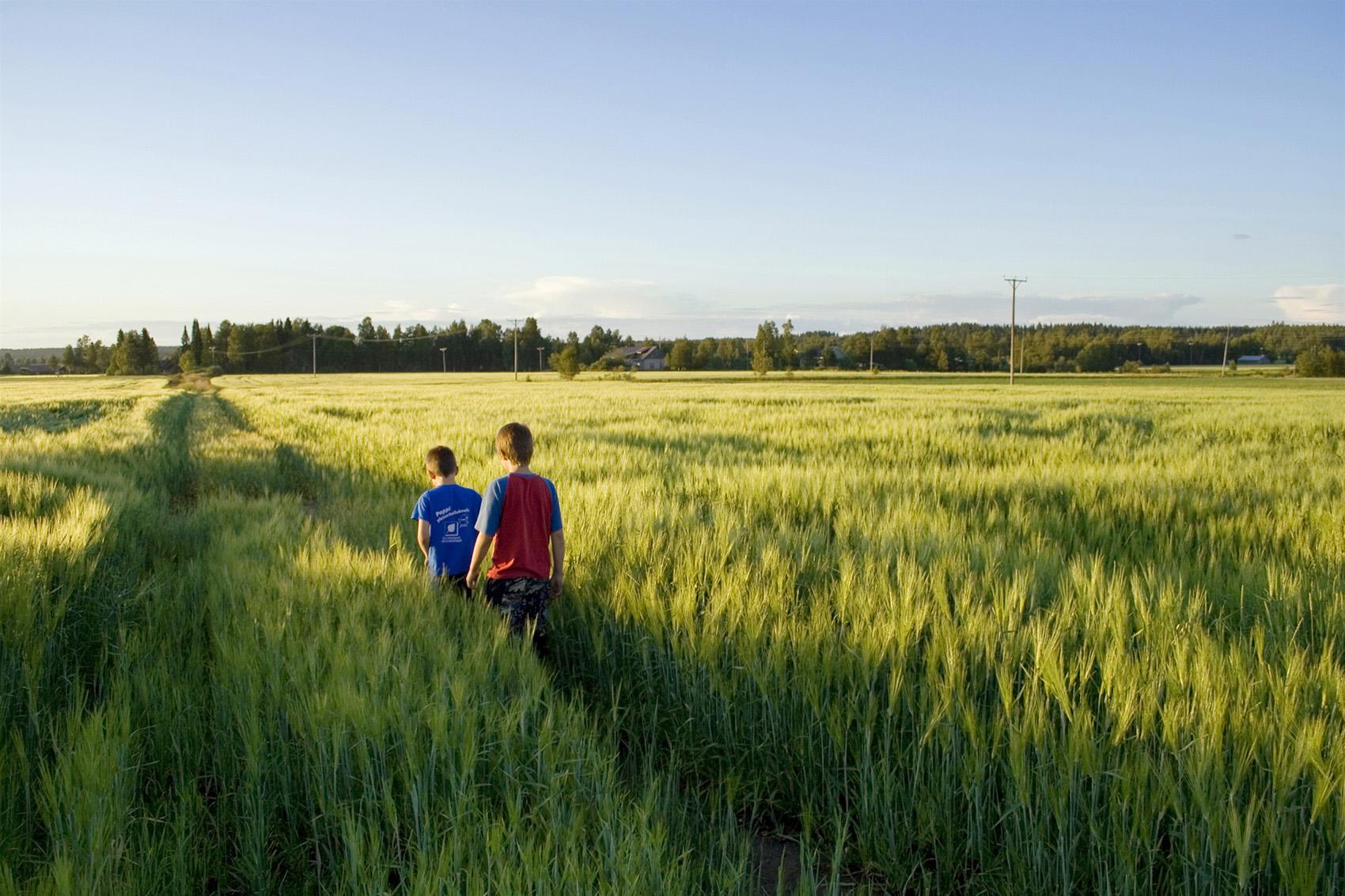 Suomalaiselle viljelijälle jalostettu lajike jättää kaiken tuoton Suomeen
