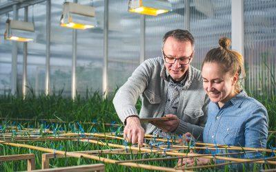Ruoantuotannon huoltovarmuus lähtee Suomeen jalostetuista peltokasveista