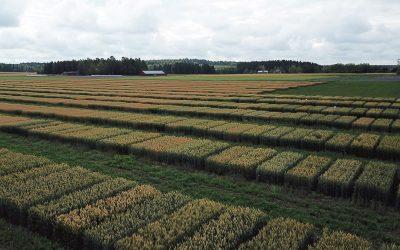 Näe Borealin lajikeuutuudet pellonpientareella elokuussa