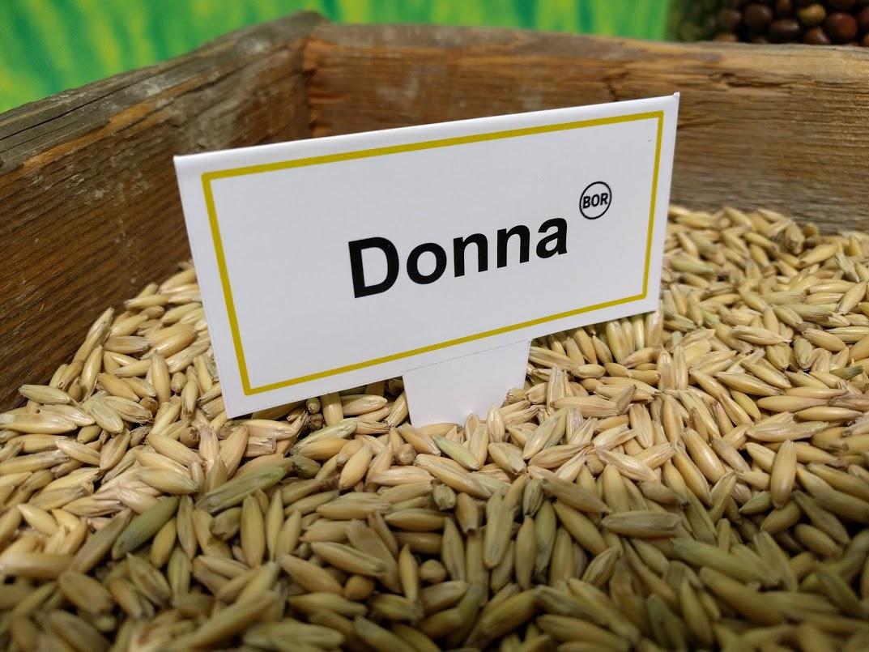 Teollisuuden arvostama Donna-kaura vakuuttaa laadulla ja viljelyvarmuudella