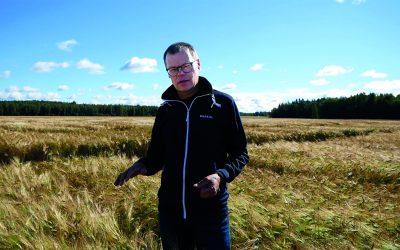 Vertti kasvoi yhdestä tähkästä Suomen viljellyimmäksi monitahoiseksi ohraksi